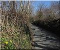 SX7167 : Dandelions near Parklands by Derek Harper