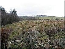 H5575 : Rushy ground, Altdrumman by Kenneth  Allen