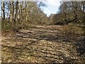 NS3881 : Clear lane in Drumkinnon Wood by Lairich Rig