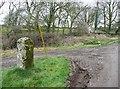 SW6632 : Bodilly Cross by Humphrey Bolton