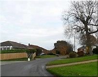 SZ5392 : Brocks Copse Road, Wootton by nick macneill