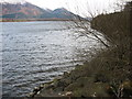 NY2029 : The shore of Bassenthwaite Lake by David Purchase