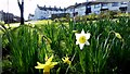 H4472 : Signs of Spring, Omagh by Kenneth  Allen