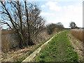 TM4491 : Footpath along the River Waveney by Evelyn Simak