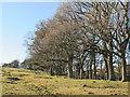 NY6458 : Woodland above Hartley Burn near Midgeholme by Mike Quinn
