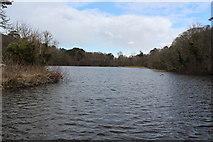 NS2209 : Swan Pond by Billy McCrorie