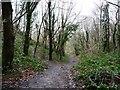 ST6371 : Footpath junction in Avon Valley Woodlands by Christine Johnstone