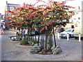 TM3863 : Trees in Fromus Square by Adrian Cable