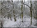 TF0820 : Late snowfall by Bob Harvey