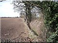SK3931 : Boundary ditch and hedge by Ian Calderwood