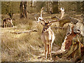 SJ7387 : Deer Park, Dunham Massey by David Dixon