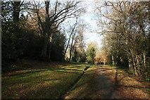 TQ5838 : Footpath, Tunbridge Wells Common by N Chadwick