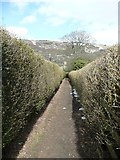 SE0026 : Neatly trimmed hedges alongside Hebden Royd Footpath 47 by Humphrey Bolton