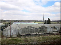SO8577 : Glasshouses and Nursery Near Kidderminster by Roy Hughes