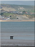 SY6879 : Weymouth: a black dog and a white horse by Chris Downer