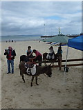 SY6879 : Weymouth: donkey rides on the beach by Chris Downer