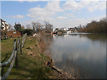 TQ0866 : River Thames from the garden of 'The Red Lion' by Row17