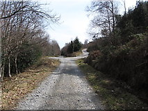 J3630 : Junction in the main forest road at Donard Forest by Eric Jones