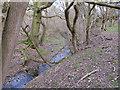 TL5324 : The  Bourne, Turner's Spring Nature Reserve by Roger Jones