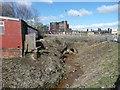 SE1121 : Canker Dike by Humphrey Bolton