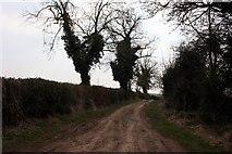 SK7384 : Cordall Lane by Graham Hogg