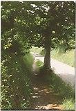 SX7962 : Path and road, Dartington, 1992 by Derek Harper