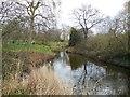 TQ2882 : Stream in Regent's Park by Paul Gillett