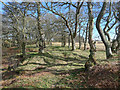 NH5857 : Sunny Spring afternoon in Drummondreach Wood by Julian Paren