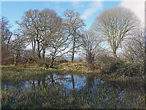 NH5757 : Lochan in Drummondreach Wood by Julian Paren