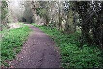 SP9024 : Rock Lane bridleway by Derwent Road by Philip Jeffrey