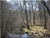 NS5160 : Woodland by the Levern Water by Richard Webb