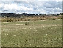 NZ0166 : Farmland south of White House Plantation by Mike Quinn