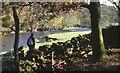 SD4898 : River Kent, 1990 by Derek Harper