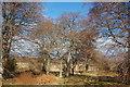NH7264 : Beech Grove by Bill Harrison