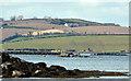 J5264 : The Loughshore, Mahee Island by Albert Bridge