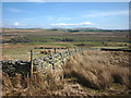 NY5806 : Intake wall, Birkbeck Fells Common by Karl and Ali