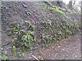 ST6969 : Old stone embankment on Via Julia byway by James Ayres