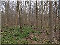 TL7831 : Looking from Pod's Lane, Broaks Wood by Roger Jones