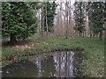 TL7931 : Mixed woodland near pond in Broaks Wood by Roger Jones