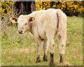 J3370 : Cattle, Lagan Meadows, Belfast (3) by Albert Bridge