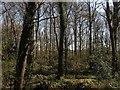 TQ1416 : Firtree Plantation by Simon Carey