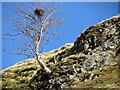 NT8210 : Lone tree on ridge near Fulhope by Andrew Curtis
