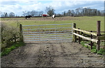 SP5682 : Field and horses along Swinford Road by Mat Fascione