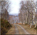 NN1588 : Track on south side of Loch Arkaig by Andy Waddington