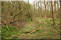 TL3453 : Remains of medieval moat, Eversden Wood by Rob Noble