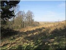 NS5161 : Woodland edge, Hurlet Hill by Richard Webb