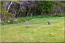 SJ9594 : The magpie and the squirrel by Gerald England