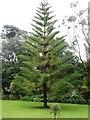 SV8914 : In Tresco Abbey Gardens by David Purchase