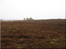 SV8913 : Great Rock, Tresco by David Purchase