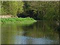 TQ0152 : River Wey Navigation, bend by Alan Hunt